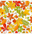 seamless pattern autumn falling leaf isolated on vector image