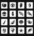 tropical sea shell icons set simple style vector image vector image