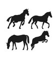 wild horses silhouette vector image