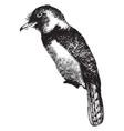 barbet vintage vector image vector image