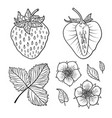 isolated strawberries graphic stylized drawing vector image
