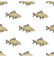seamless pattern with common carp isolated on vector image vector image