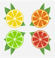 citrus fruits with leaf vector image