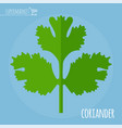 coriander flat design icon vector image