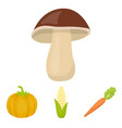 corn corn vitamin carrots with tops pumpkin vector image vector image