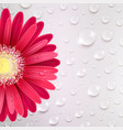 gerbera flower on a background of water droplets vector image