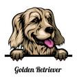 head golden retriever - dog breed color image vector image vector image