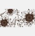 sunflowers line art hand drawn decor vector image vector image