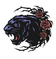 The head of a black panther and roses vector image vector image