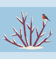 winter landscape bullfinch sitting on snow bush vector image