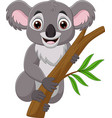 cartoon koala on a tree branch vector image vector image