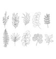 botanical set black and white graphic plant vector image