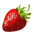 Delicious ripe sweet red strawberries closeup vector image vector image