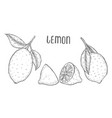 lime or lemon set vector image vector image