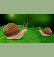 snail on leaves concept background realistic vector image