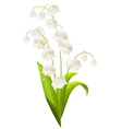 lily of the valley isolated vector image