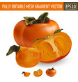 persimmon on white background vector image vector image