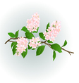 Pink Lilac branch natural background vector image vector image