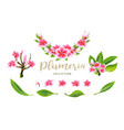 tropical pink plumeria flowers branches vector image