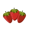 silhouette colorful set with strawberrys vector image vector image