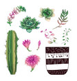 potted cacti and succulents plants badge vector image