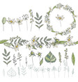 wild flowers isolated on white background floral vector image