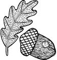 acorn - coloring page for adults and ink graphic vector image vector image