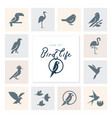 birds icon set in flat style for product vector image vector image