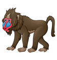 cartoon mandrill baboon vector image vector image