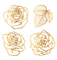 set decorative outline roses beautiful flowers vector image
