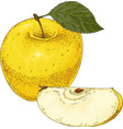 ripe yellow apple and slice vector image vector image