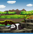 scene with panda in zoo vector image vector image