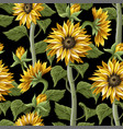 seamless pattern with sunflowers on a black vector image