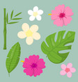 set tropical leaves flowers elements vector image