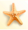 starfish vector image vector image