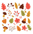 autumn fall forest leaves design element vector image vector image