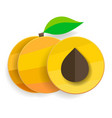 flat apricots in section and whole with leaves vector image vector image