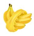 bunch of bananas in juice splash vector image