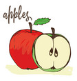 apples hand painted vector image