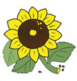 large ripe sunflower vector image