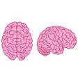 Pink brain silhouettes set