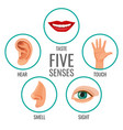 five senses of human perception poster icons vector image vector image