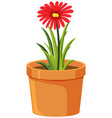 one red flower in clay pot on white background vector image vector image
