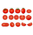 set of fresh red tomatos isolated on white vector image