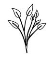sketch contour of branches with leaves plant vector image vector image