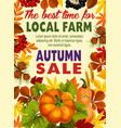 autumn sale poster of farm harvest vegetable leaf vector image vector image