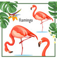 flamingo poster with leaves and animals vector image vector image