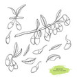 goji berry hand drawn sketch colection vector image