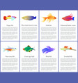 set of aquarium fishes color vector image vector image
