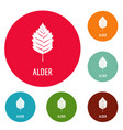 alder leaf icons circle set vector image vector image
